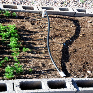 Drip line for the Carrots May 31, 2014