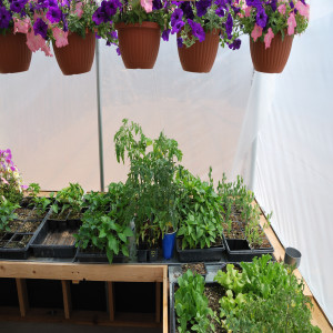 Flowers and Plants in Greenhouse