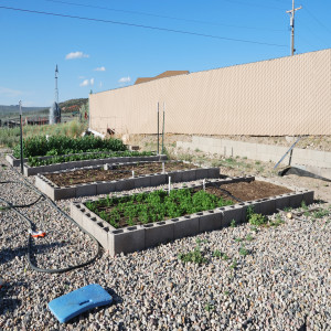 Overall of Garden May 31, 2014