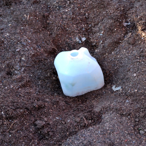 empty milk carton used to cover plant