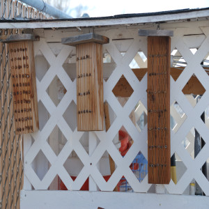 leafcutter bee hives