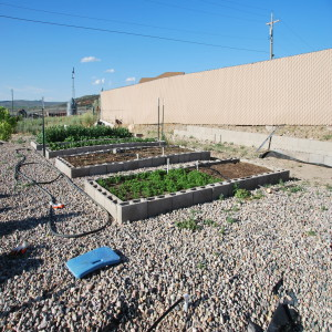 Modified square foot garden are built with cinder blocks