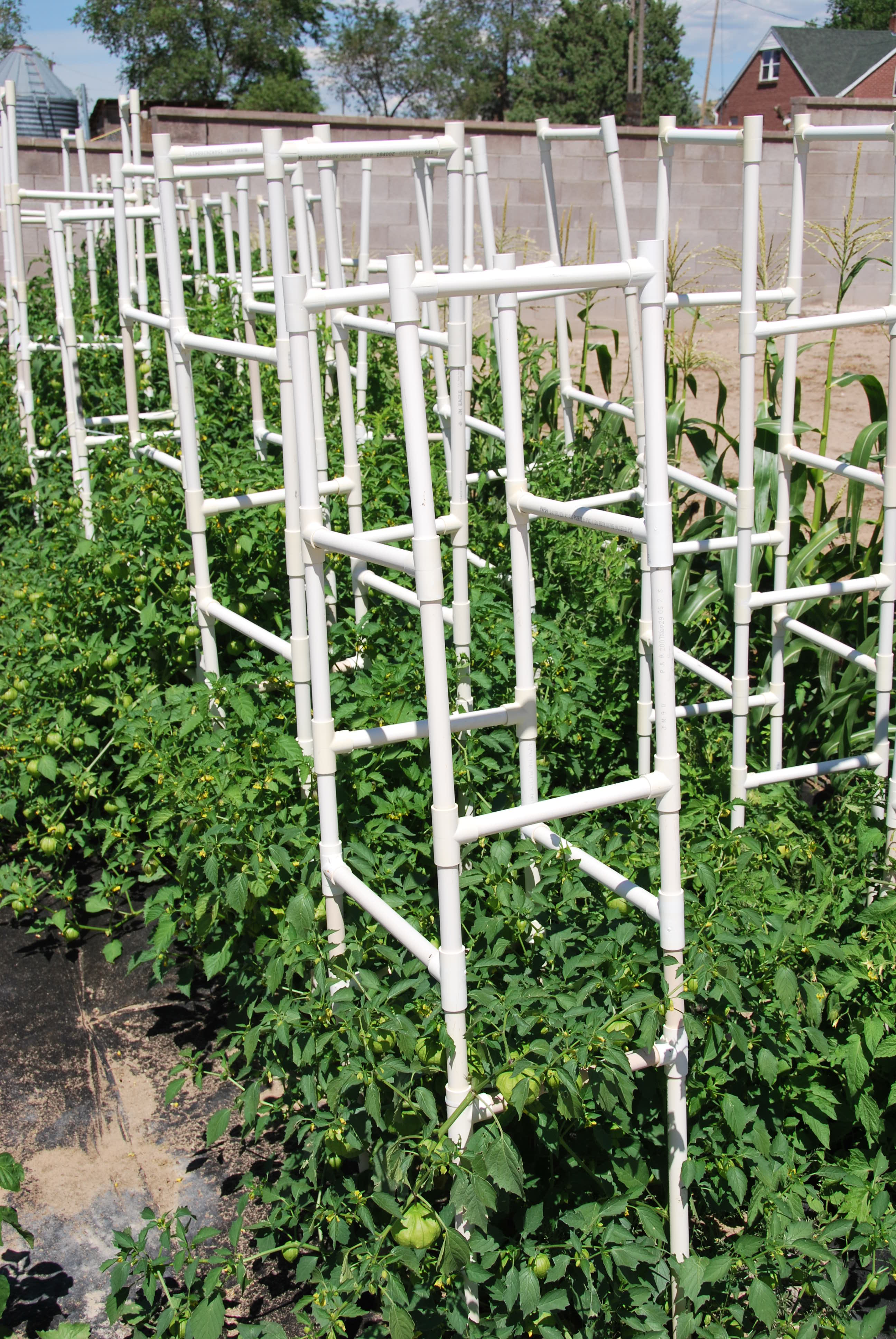 how to keep birds off tomato cages
