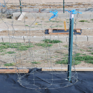wire made into tomato cage